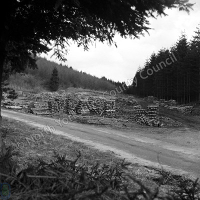 Hawdale, Forestry